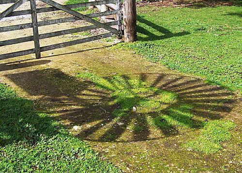 Windmill Shadow.resized