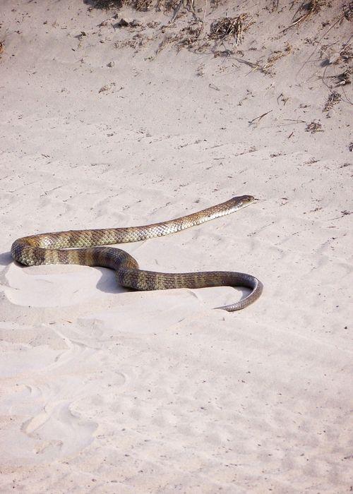 Snake at easter web